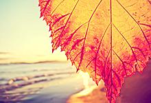 Сочи осень